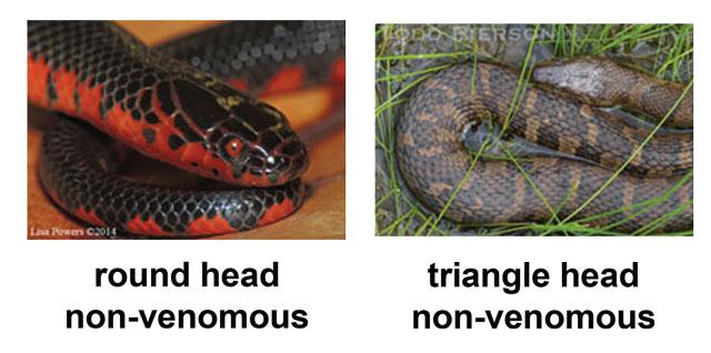 Snake head shapes